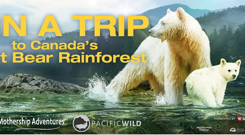 great bear rainforest sweepstakes